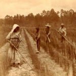 Esclaves Noirs travaillant au champ