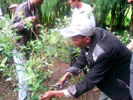Des planteurs d'arbres, issus de l'immigration en provenance d'Afrique, ont déclaré mardi qu'ils travaillaient dans des conditions du tiers-monde en Colombie-Britannique