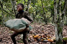Le travail et l'esclavage des enfants sont monnaie courante dans les plantations de cacao, un scandale dont les fabricants de chocolat ont connaissance depuis de nombreuses années.