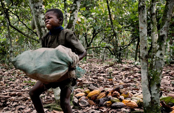 the issue of child trafficking and the use of child slavery on cocoa plantations Ivory coast fights child labor on cocoa plantations  march 28, 2016 8:45 pm  child trafficking  an estimated 11 million children worked on cocoa plantations during the 2013-2014 harvest.