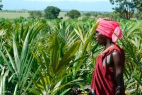 La plupart des terres vendues ou louées (land grab en anglais) se retrouvent dans les pays du Sud, avec 70% en Afrique sub-saharienne. Les autres principaux endroits se situent en Asie du Sud et en Amérique latine.