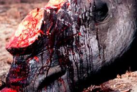 On considère que le trafic d'animaux est le troisième plus gros négoce illégal mondial, derrière le trafic de drogue et le trafic d'armes.