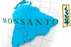 Monsanto produit des semences génétiquement modifiées qui sont résistantes aux herbicides, permettant aux agriculteurs de pulvériser massivement des champs entiers de soja ou de maïs en tuant seulement les mauvaises herbes