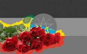 Bien que la plupart des entreprises de fleurs soient sous contrôle étranger, la floriculture éthiopienne a créé plus de 50.000 emplois et plus de 70 pour cent de cette main-d'œuvre sont des femmes. Pendant que poussent délicatement les roses paradoxalement une partie du pays souffre de la sécheresse, du manque d'eau et de nourriture.