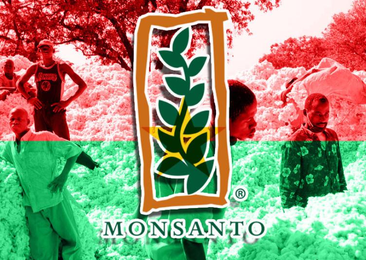 En Afrique, l'Afrique du Sud, le Burkina Faso et l'Égypte cultivent du coton GM (génétiquement modifié) en 2012. Au pays des hommes intègres, le coton, la fibre naturelle la plus produite dans le monde, est la deuxième source de revenus pour le pays ouest-africain, juste après l'or.
